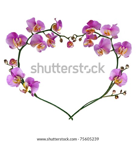 heart from pink orchids isolated on white - stock photo