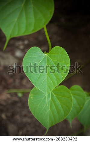Heart leaf background.