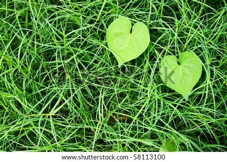 Heart leaf on the grass texture - stock photo