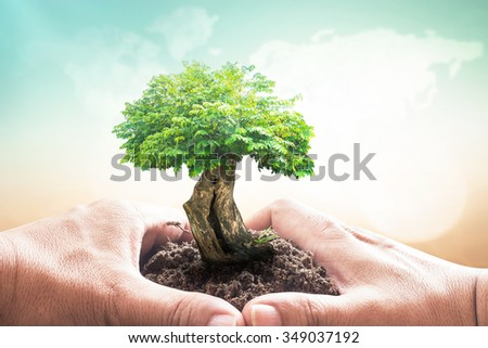 Heart of hand holding big plant with soil on blur abstract beautiful world map of clouds over colorful sunset background. Ecology, World Environment Day, Investment, Charity, Human Right Day concept - stock photo