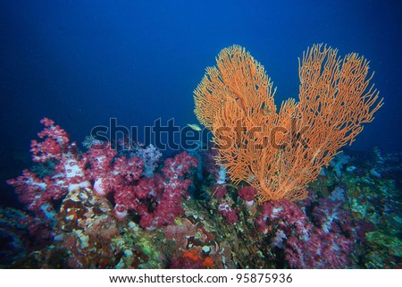 Heart shape coral underwater - stock photo