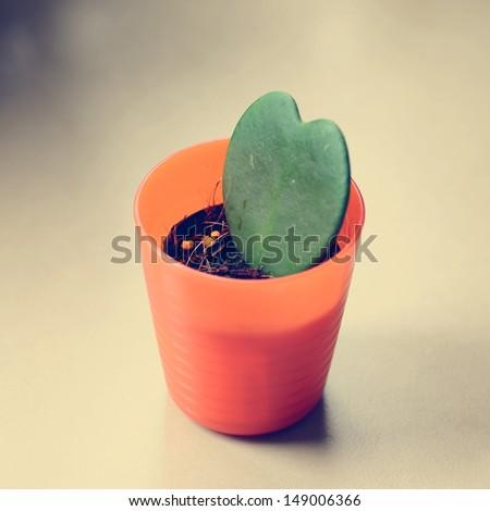 Heart shaped cactus, vintage style - stock photo