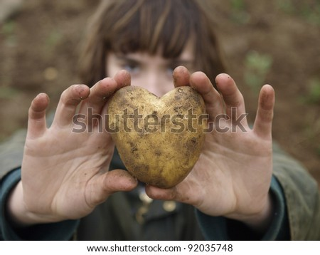 Heart shaped organic potato.