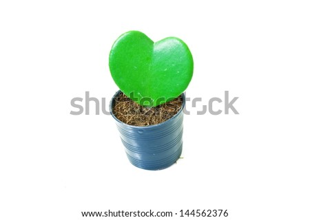 Heart-shaped plant in a flower pot isolated on white background - stock photo