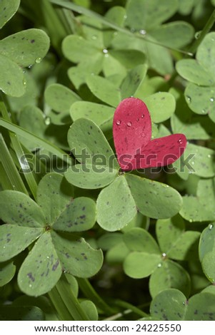heart within field of green clover - stock photo