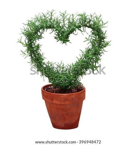 Hearted shape plant in a pot isolated on white background - stock photo