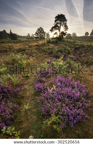 Heather in woods on forest landscape - stock photo