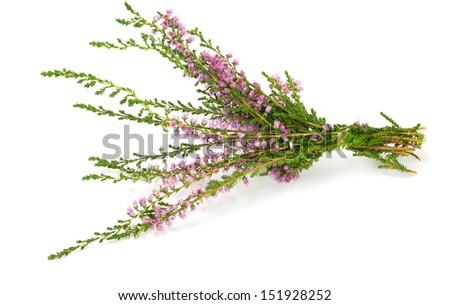 heather isolated on white background - stock photo