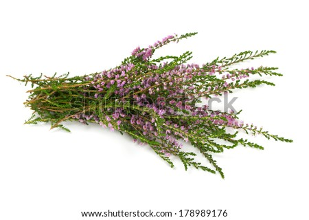heather isolated on white backrgound - stock photo