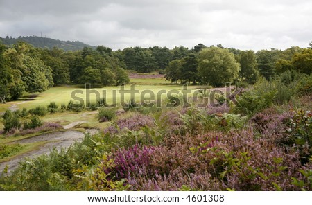 Heather on the heath. - stock photo