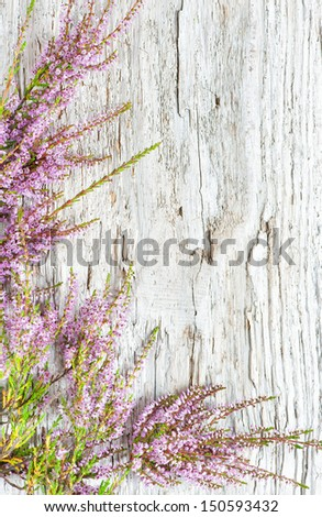 Heather on the old wood - stock photo
