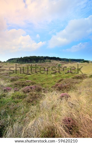 Heathland with dunes and blue cloudy sky
