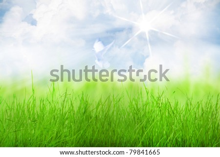 heavenly clouds behind the green grass and a bird in the sky - stock photo