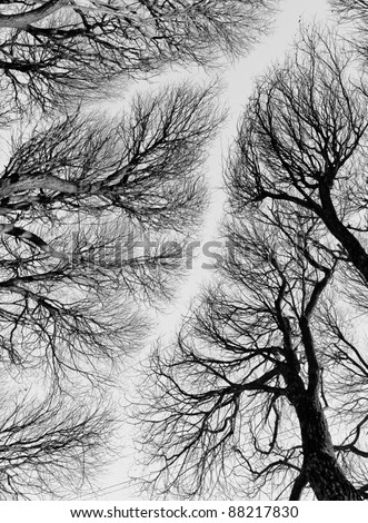 Heavenly road among the tops of the trees - black and white - stock photo
