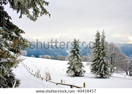 Heavy December snow covering the forest landscape - stock photo