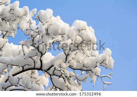Heavy snow on the tree against blue sky