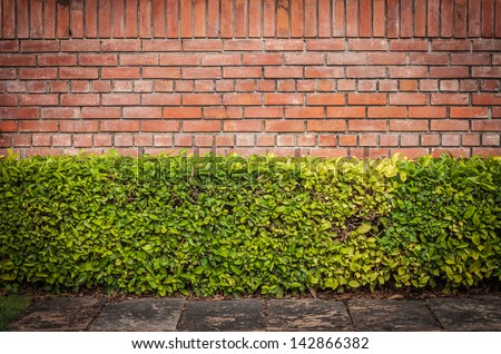 Hedge and wall background - stock photo