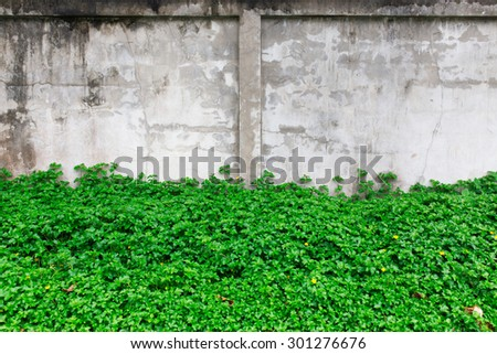 hedge over brick wall background - stock photo