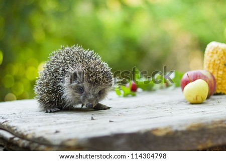 Hedgehog among fruits