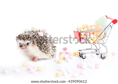 Hedgehog and shopping trolley with candies on white background - stock photo