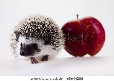 Hedgehog & apple - stock photo