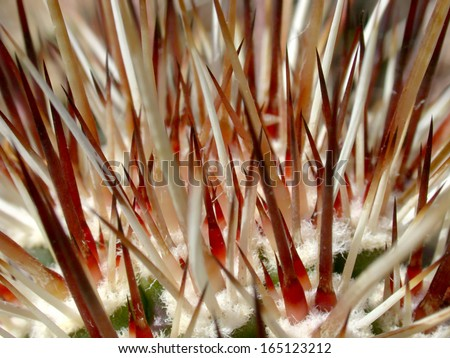 Hedgehog cactus growing new spines - stock photo