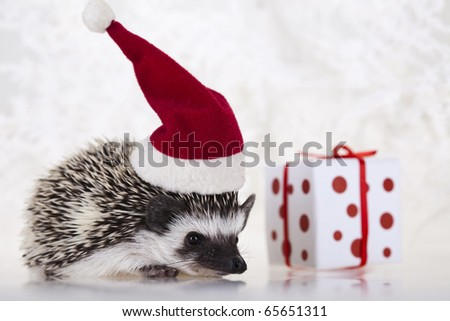 Hedgehog christmas