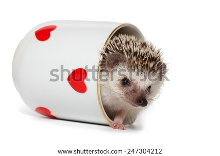 Hedgehog comes out of the cup decorated with red hearts - stock photo