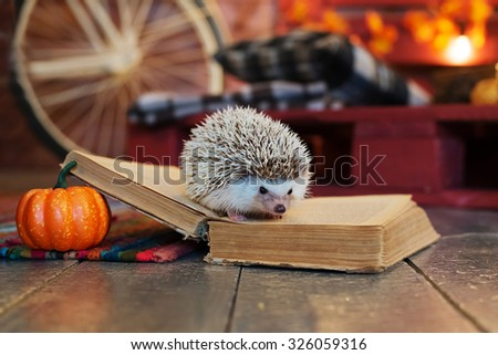 Hedgehog on a open book autumn leaves and pumpkin - stock photo