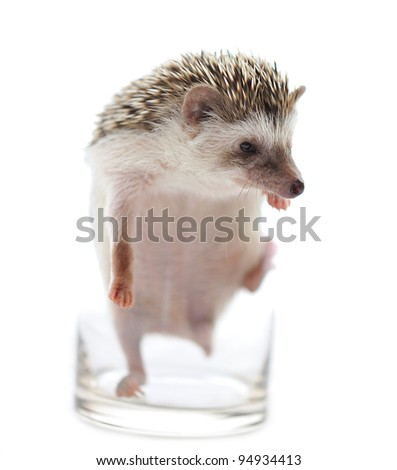 Hedgehog  on a white background - stock photo