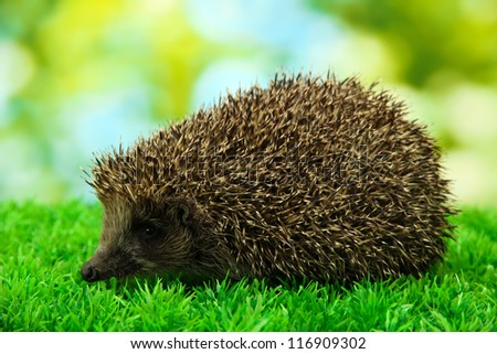 Hedgehog on grass, on green background - stock photo