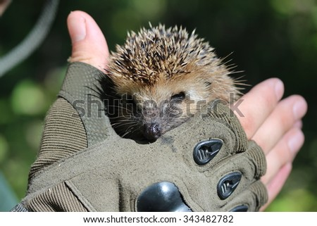 Hedgehog on the hand of a man.  - stock photo