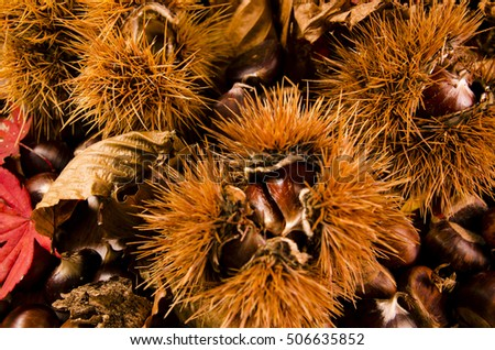 Hedgehog with chestnuts and maple leaves