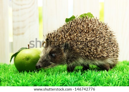 Hedgehog with leaf and apples, on grass,  on fence background - stock photo