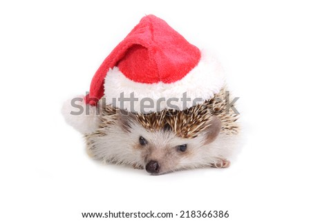 Hedgehog with red santa claus hat on white background. - stock photo
