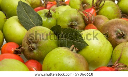Hedgerow Fruit of vibrant red rosehips and green crabapples. - stock photo