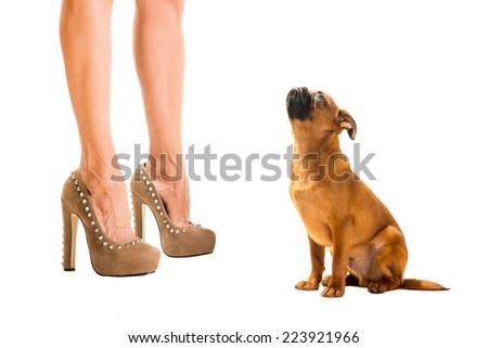 heels and dog on white background - stock photo