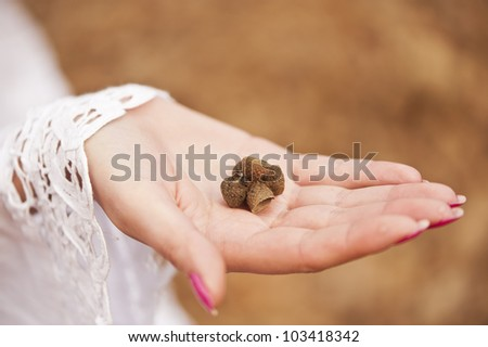 held in the palm bunch of acorns - stock photo