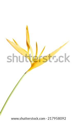 Heliconia - stock photo
