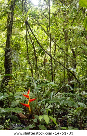 Heliconia plant flowering in the Amazon rainforest - stock photo