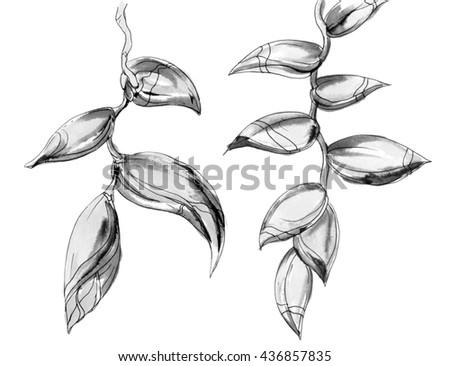 Black And White Line Drawing Flower : Drawing line henri matisse hans holbein and ellsworth