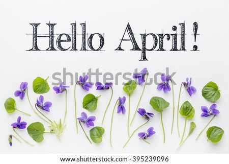 Hello April  greetings with fresh viola flowers  and leaves on white art canvas - stock photo