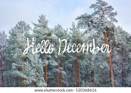 Gentil Hello December (winter) Card