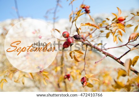 Hello September Wallpaper, Autumn Background With Yellow Leaves And Rosehip