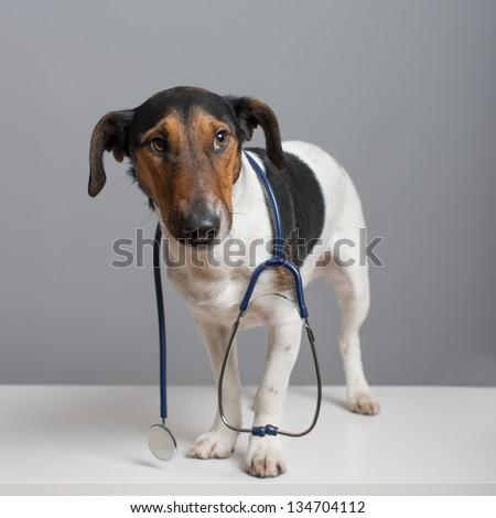 Help Me I'm A Sick Dog - stock photo