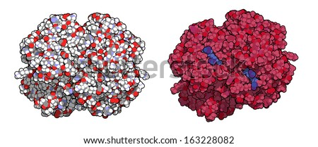 Hemoglobin (human, Hb) protein molecule. Iron-containing oxygen transport protein found in red blood cells. Left: all atoms as conventionally colored spheres. Right: protein colored red, heme blue. - stock photo