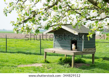 Henhouse with white chicken at the farm - stock photo
