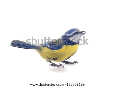 Herald of spring - titmouse bird on tree branches on white background, praise spring song. Blue tit, Parus caeruleus