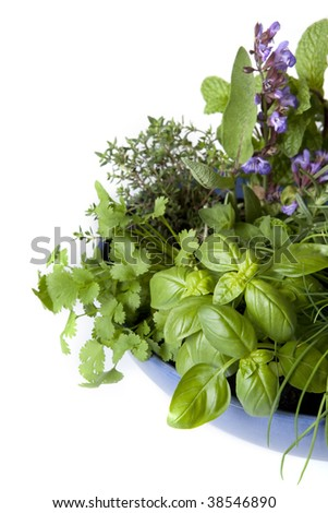 Herb garden in a blue bowl, isolated on white.  Includes basil, chives, rosemary, flowering sage, thyme, mint, rosemary, oregano, and coriander or cilantro. - stock photo