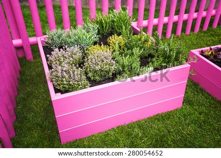 Herb garden. Pink raised beds with herbs and vegetables. Urban garden design - stock photo